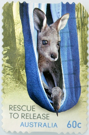 AUSTRALIA - CIRCA 2010: A stamp printed in Australia, shows kangaroo rescued stuck in a towel inside the bag like his mother, circa 2010 photo