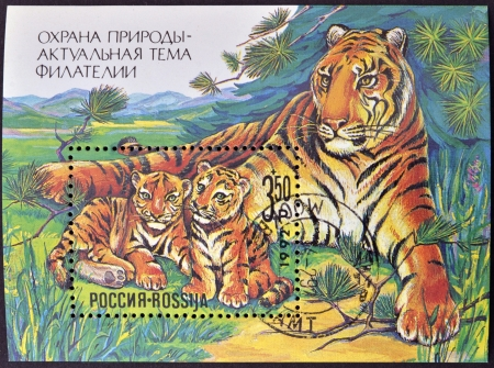 RUSSIA - CIRCA 1992  A stamp printed in Russia shows Family resting tigers, circa 1992 photo