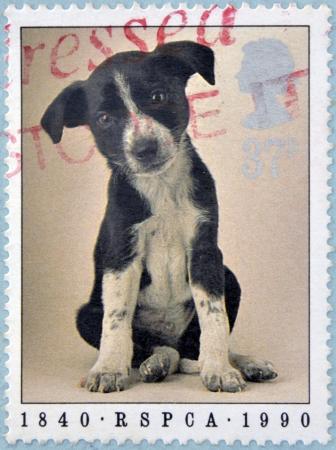Reino Unido - CIRCA 1990: Un sello impreso en Inglaterra muestra un perro, alrededor del año 1990