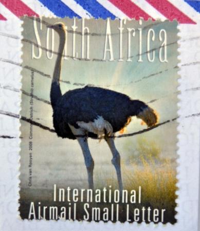 SOUTH AFRICA - CIRCA 2000: A stamp printed in RSA shows an ostrich, circa 2000 photo