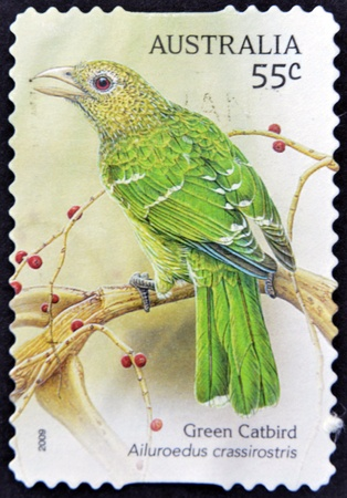 AUSTRALIA - CIRCA 2009: A stamp printed in Australia shows Green Catbird, Ailuroedus crassiostis, circa 2009  photo