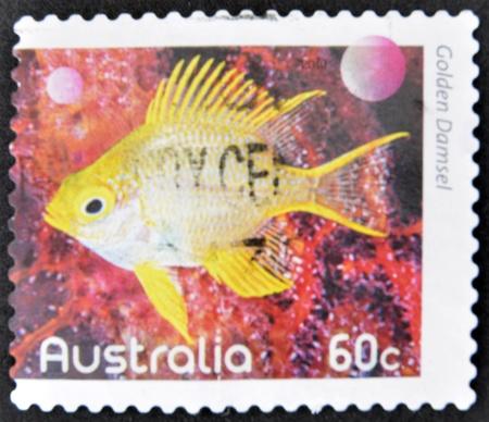 damselfish: AUSTRALIA - CIRCA 2010: A stamp printed in Australia shows an image of regal Golden Damselfish faith, inventive, circa 2010