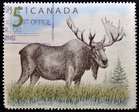 CANADA - CIRCA 1997: A stamp printed in Canada shows a Moose orignal, circa 1997 Stock Photo - 14596879
