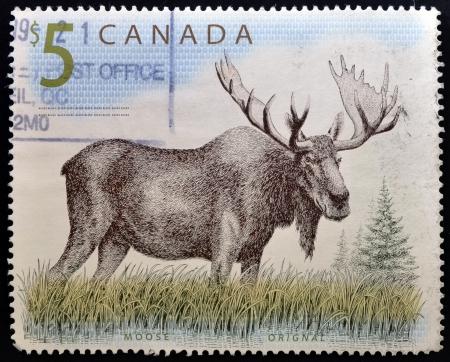 canada stamp: CANADA - CIRCA 1997: A stamp printed in Canada shows a Moose orignal, circa 1997