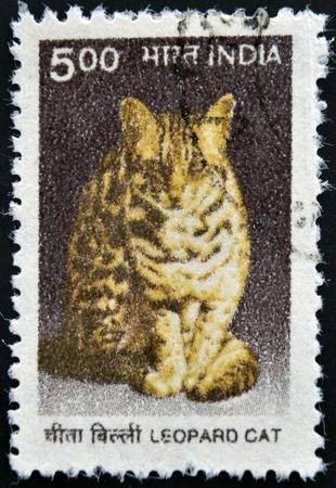 prionailurus: INDIA - CIRCA 2000: A stamp printed in India shows a Leopard cat (Prionailurus bengalensis), circa 2000