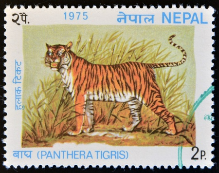 NEPAL - CIRCA 1975: A stamp printed in Nepal shows image a Tiger, Panthera Tigris, circa 1975.