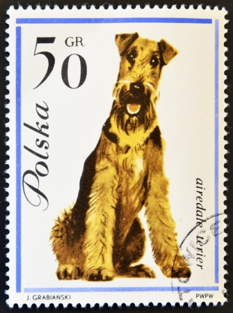 airedale terrier dog: POLAND - CIRCA 1963: stamp printed in Poland shows Airedale terrier dog, circa 1963.