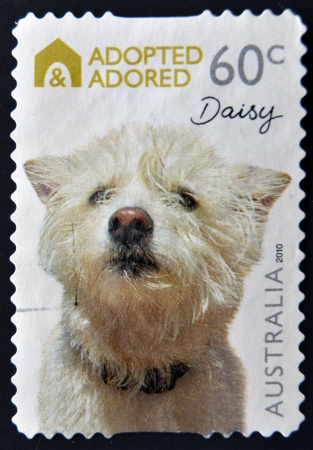 adopted: AUSTRALIA - CIRCA 2010: A stamp printed in Australia shows Adopted and adored campaign, Daisy, a dog breed westies, circa 2010