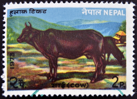 NEPAL - CIRCA 1973: A stamp printed in Nepal shows a Cow, circa 1973 photo