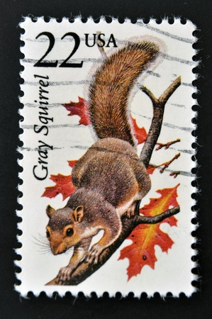 UNITED STATES OF AMERICA - CIRCA 1987  A stamp printed in USA shows a Gray Squirrel, circa 1987 photo