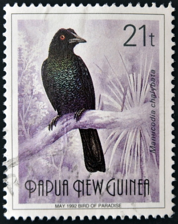 PAPUA NEW GUINEA - CIRCA 1992  A stamp printed in Papua shows bird of paradise, manucodia chalybata, circa 1992  Stock Photo - 15209839