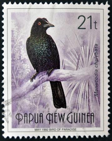 PAPUA NEW GUINEA - CIRCA 1992  A stamp printed in Papua shows bird of paradise, manucodia chalybata, circa 1992 Stock Photo - 15209839