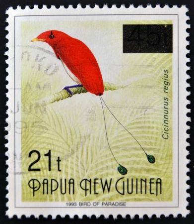 PAPUA NEW GUINEA - CIRCA 1993: A stamp printed in Papua shows bird of paradise, cicinnurus regius, circa 1993 Stock Photo - 14933878