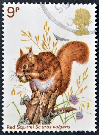 UNITED KINGDOM - CIRCA 1977: A Stamp printed in Great Britain celebrating British Wildlife, showing a Red Squirrel, circa 1977 Stock Photo - 15209811