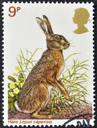 UNITED KINGDOM - CIRCA 1977  A Stamp printed in Great Britain celebrating British Wildlife, showing a Brown Hare, circa 1977  Stock Photo - 15210191