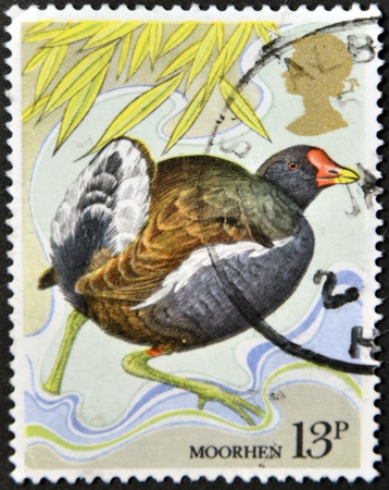 UNITED KINGDOM - CIRCA 1980: A stamp printed in Great Britain shows a moorhen, circa 1980 Stock Photo - 14933886
