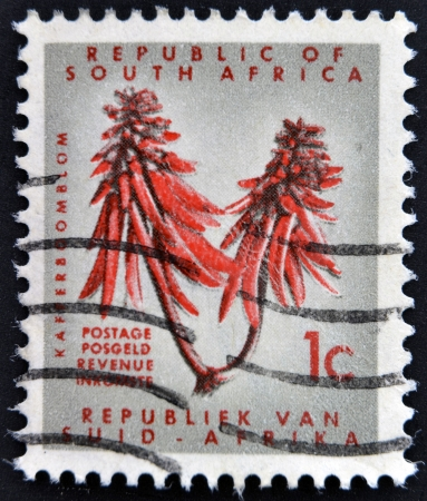erythrina: SOUTH AFRICA - CIRCA 1963  A stamp printed in South Africa shows a Kafferboom  Erythrina caffra , circa 1963