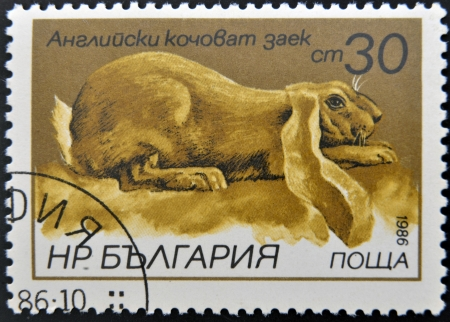 BULGARIA - CIRCA 1986: A stamp printed in Bulgaria shows English lop-eared rabbit, circa 1986  photo