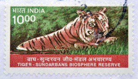 indian postal stamp: INDIA - 1982: A stamp printed in India shows image of a tiger at Sundarbans Biosphere Reserve, circa 1982