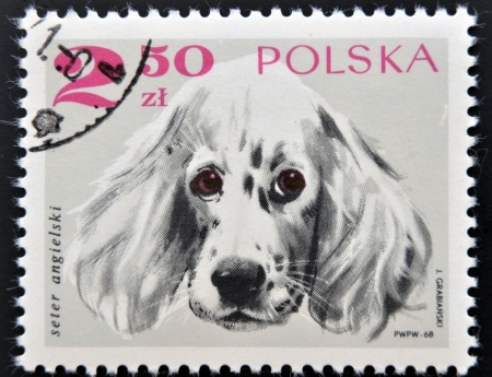POLAND - CIRCA 1968: A stamp printed in Poland shows an angels setter dog, circa 1968 photo