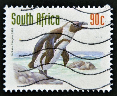 rsa: SOUTH AFRICA - CIRCA 1998: A stamp printed in RSA shows jackass penguin, circa 1998