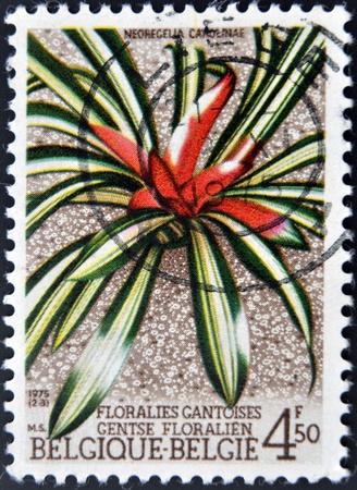 neoregelia: BELGIUM - CIRCA 1975: A stamp printed in Belgium shows Flower Neoregelia Carolinae, circa 1975
