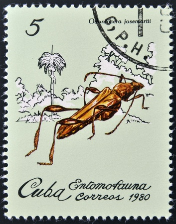 CUBA - CIRCA 1980: A stamp printed in Cuba dedicated to Entomofauna (Insect fauna) shows Odontocera josemartii, circa 1980  photo