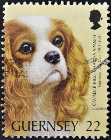 guernsey: GUERNSEY - CIRCA 2001: A stamp printed in Guernsey shows a dog,cavalier king charles spaniel, circa 2001  Stock Photo