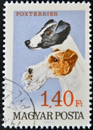 HUNGARY - CIRCA 1990: A stamp printed in Hungary shows Foxterrier, circa 1990 photo