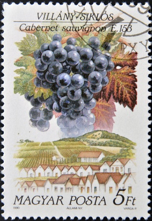 cabernet sauvignon: HUNGARY - CIRCA 1990: A stamp printed in Hungary shows fruit grape Cabernet sauvignon, circa 1990