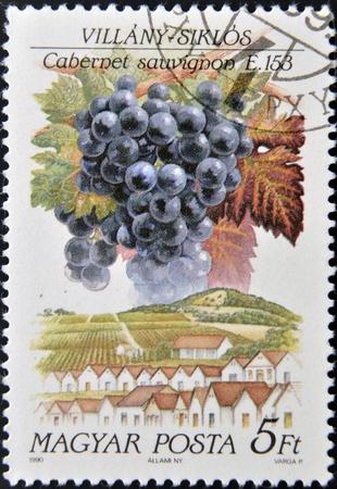 cabernet: HUNGR�A - CIRCA 1990: Un sello impreso en Hungr�a muestra fruta de la uva Cabernet sauvignon, alrededor de 1990
