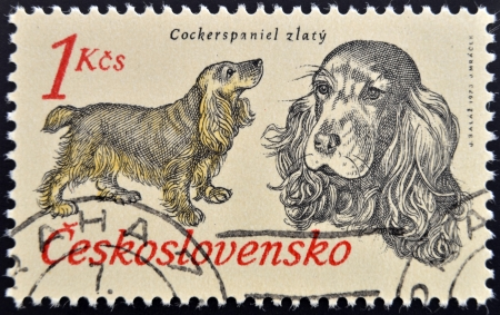CZECHOSLOVAKIA - CIRCA 1973: A stamp printed in Czechoslovakia, shows Cocker Spaniel from the series Hunting Dogs, circa 1973