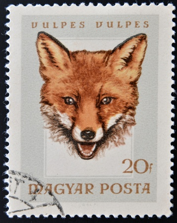 HUNGARY - CIRCA 1985: A stamp printed in Hungary showing fox (vulpes vulpes), circa 1985  Stock Photo - 15670229