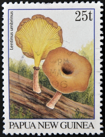 PAPUA NEW GUINEA - CIRCA 1995: A stamp printed in Papua New Guinea shows native mushrooms (Lentinus umbrinus), circa 1995 Stock Photo - 15670244