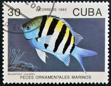 CUBA - CIRCA 1992  A stamp printed in Cuba dedicated to ornamental fish, shows abudefduf saxatilis, circa 1992  Stock Photo - 15745160
