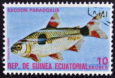 subaquatic: EQUATORIAL GUINEA - CIRCA 1974  A stamp printed in Guinea Ecuatorial dedicated to exotic fish shows exodon paradoxus, circa 1974