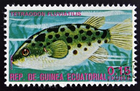 subaquatic: EQUATORIAL GUINEA - CIRCA 1974  A stamp printed in Guinea Ecuatorial dedicated to exotic fish shows tetraodon fluviatilis, circa 1974   Editorial