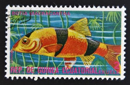 subsea: EQUATORIAL GUINEA - CIRCA 1974  A stamp printed in Guinea Ecuatorial dedicated to exotic fish shows botia macracantha, circa 1974