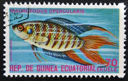 subsea: EQUATORIAL GUINEA - CIRCA 1974: A stamp printed in Guinea Ecuatorial dedicated to exotic fish shows macropodus opercularis, circa 1974.