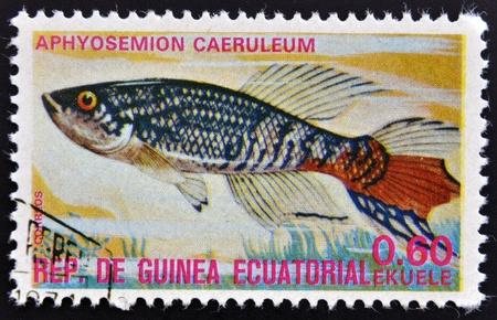 subaquatic: EQUATORIAL GUINEA - CIRCA 1974: A stamp printed in Guinea Ecuatorial dedicated to exotic fish shows aphyosemion caeruleum, circa 1974.