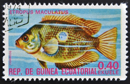 subsea: EQUATORIAL GUINEA - CIRCA 1974: A stamp printed in Guinea Ecuatorial dedicated to exotic fish shows etropus maculatus, circa 1974.  Editorial