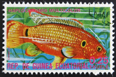 subsea: EQUATORIAL GUINEA - CIRCA 1974: A stamp printed in Guinea Ecuatorial dedicated to exotic fish shows haplochromis multicolor, circa 1974.