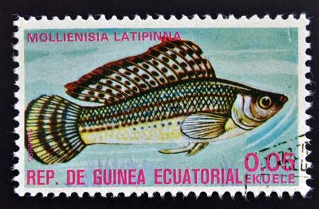 subsea: EQUATORIAL GUINEA - CIRCA 1974: A stamp printed in Guinea Ecuatorial dedicated to exotic fish shows mollienisia latipinna, circa 1974.