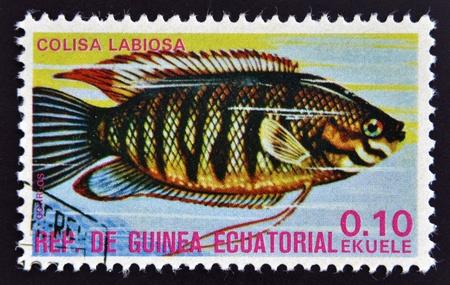 subaquatic: EQUATORIAL GUINEA - CIRCA 1974: A stamp printed in Guinea Ecuatorial dedicated to exotic fish shows colisa labiosa, circa 1974.