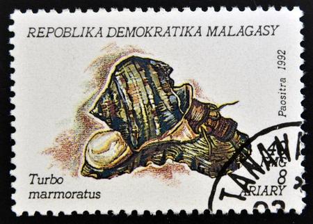 MADAGASCAR - CIRCA 1992: A stamp printed in Madagacar shows turbo marmoratus, circa 1992 Stock Photo - 15745108