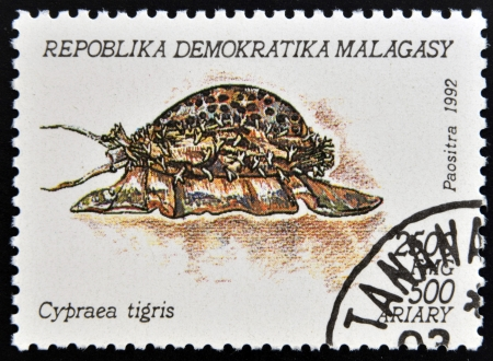 MADAGASCAR - CIRCA 1992: A stamp printed in Madagacar shows cypraea tigris, circa 1992 Stock Photo - 15745110