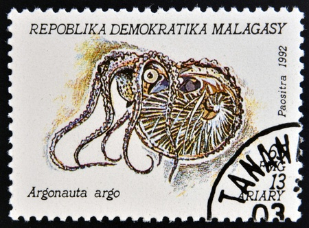 MADAGASCAR - CIRCA 1992: A stamp printed in Madagacar shows argonauta argo, circa 1992 Stock Photo - 15745115