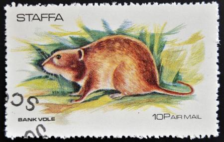 vole: STAFFA - CIRCA 1973  stamp printed in Staffa shows bank vole, circa 1973