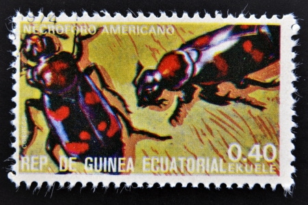 scavenger: EQUATORIAL GUINEA - CIRCA 1973   stamp printed in Guinea dedicated to insects shows scavenger beetle American, circa 1973