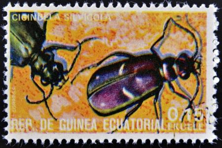 cicindela: EQUATORIAL GUINEA - CIRCA 1973:  stamp printed in Guinea dedicated to insects shows cicindela sylvicola, circa 1973